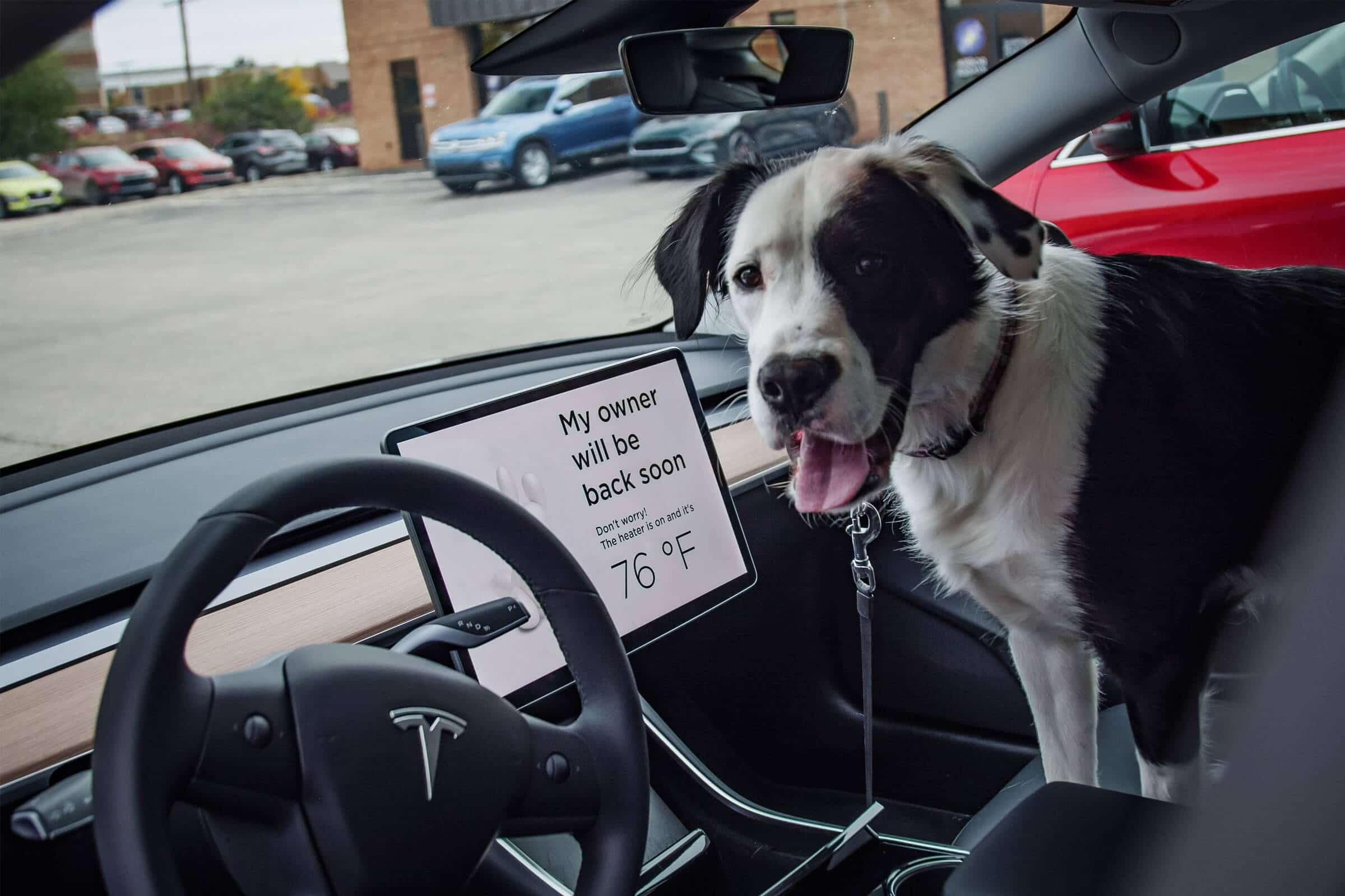 Tesla's Dog Mode Is A Game Changer